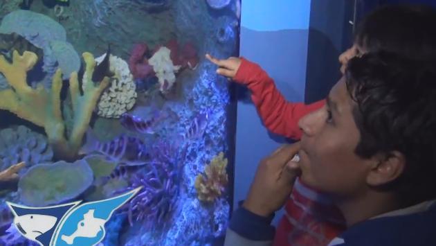 Zoológico de Huachipa presentó el acuario más grande del país