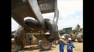 ¡Encontraron una anaconda en plena construcción! (VIDEO)