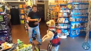 ¡Mira aquí los coordinados pasos de salsa de este perro con su dueño! (VIDEO)
