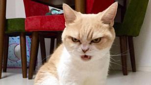¿Sabías que tu gato podría matarte? ¡Entérate AQUÍ!