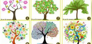 ¡Elige un árbol y descubre que dice sobre tu personalidades!
