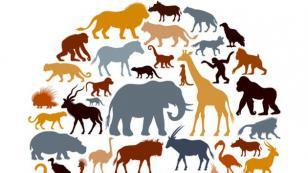 ¡Tu fecha de nacimiento revelaría qué tipo de animal serías!