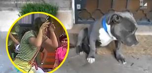 Viral del 'Perro arrepentido' está causando furor
